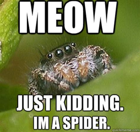 Spider Meme - image 325848 misunderstood spider know your meme