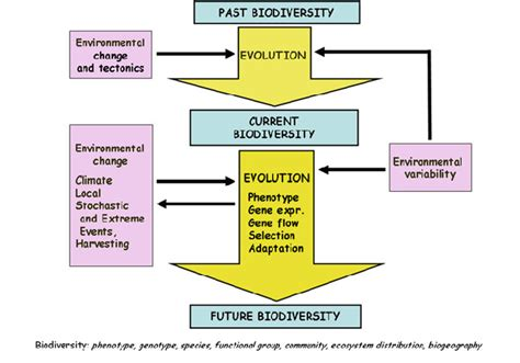 human evolution flowchart evolution diagram chart 23 wiring diagram images