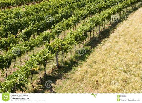 Grape Garden by Grape Garden Royalty Free Stock Image Image 8765856