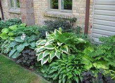 immergrüne pflanzen als sichtschutz 841 chinaschilf hecke casa garten gardens and
