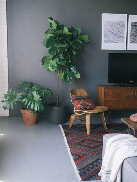 Plantes Appartement Sombre by Mettre Des Plantes Dans Un Couloir Ou Une Pi 232 Ce Sombre