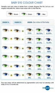 eye color genetics chart what color will your baby
