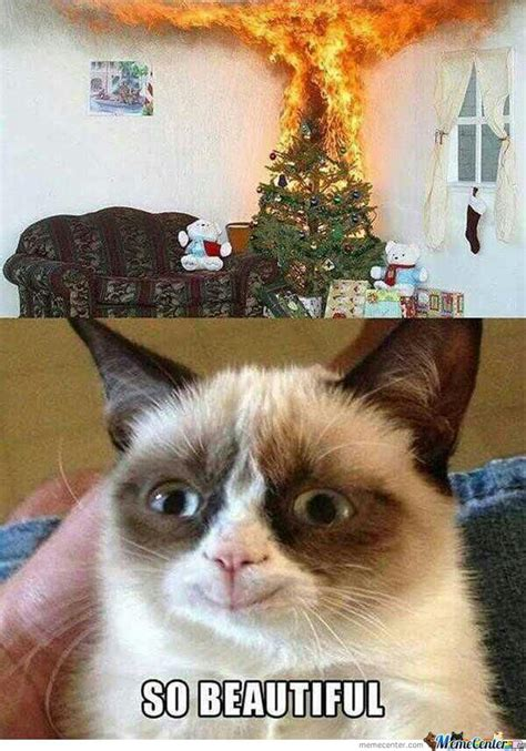 Angry Cat Meme No - mad cat memes image memes at relatably com