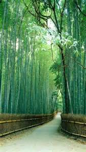 sagano bamboo forest kyoto japan buy prepasted wallpaper murals wall mural bamboo forest seen from the side japan pixersize com