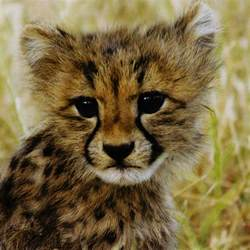 Barnes And Noble Search Books Baby Animals In Grasslands Editors Of Kingfisher Macmillan
