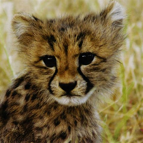 Does Barnes And Noble Buy Books Baby Animals In Grasslands Editors Of Kingfisher Macmillan