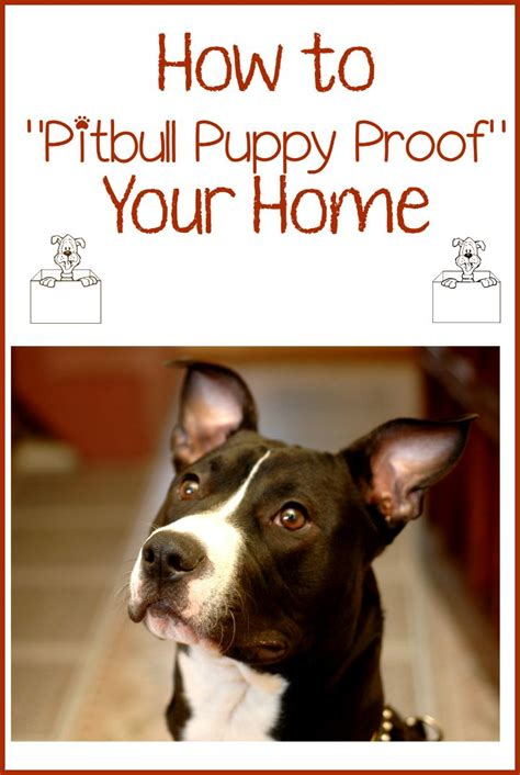 pitbull puppy tips pitbull puppy tips proofing your home