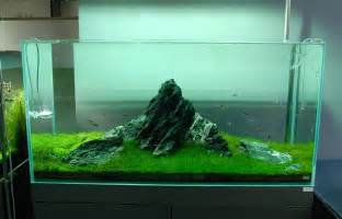 aquarium designs nature aquariums and aquascaping inspiration