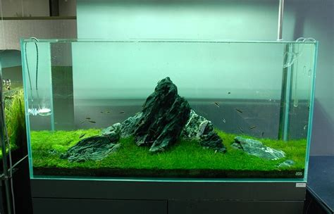 Freshwater Aquascaping Ideas by Nature Aquariums And Aquascaping Inspiration