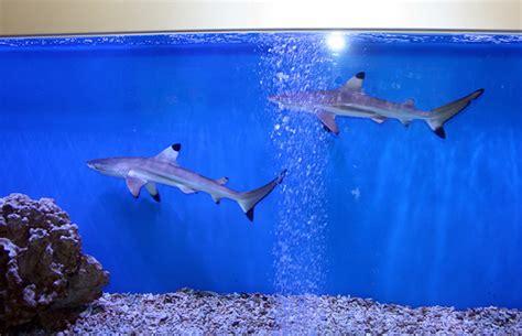 Small Sharks For Home Aquarium Shark Aquarium In Jing An Temple Subway 1 Flickr Photo