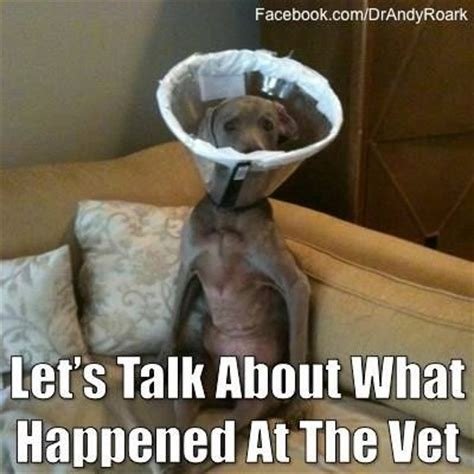 Dog Vet Meme - 63 best images about veterinary pet memes on pinterest