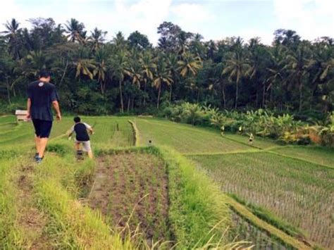 hash house harriers bali culture hash house harriers diving indo