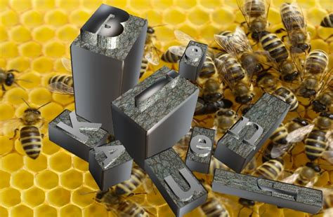 honig schleudern wann bienen kaufen wie viele wo und wann
