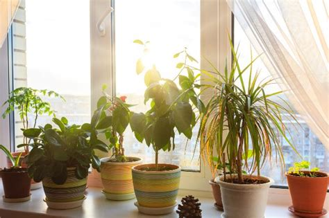 light   window considered direct sunlight