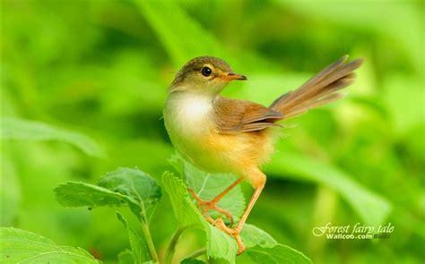 imagenes animales relacionandose bonito fondo de pantalla de primavera de aves 14 fondo