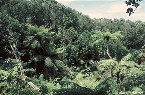 Airland New Eco Komplit 200 200 December On Sale Epow Ecology Picture Of The Week A Gondwana Island Forest