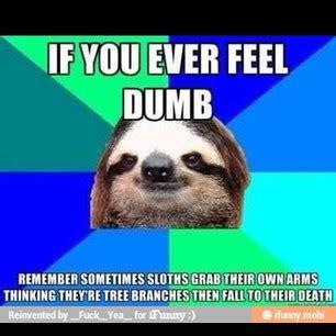 Make A Sloth Meme - stuff my random stuff