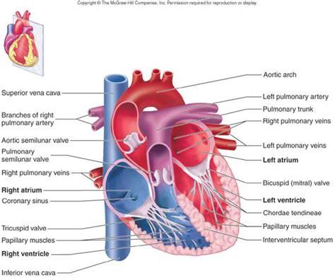 image gallery anatomy interior view