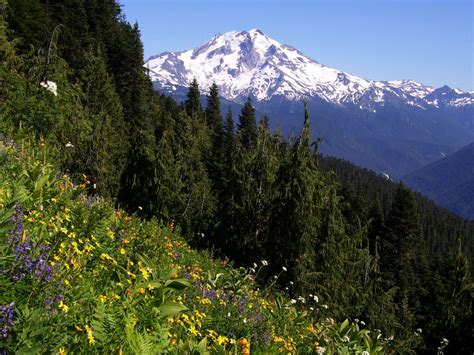 mountain trailhead glacier peak from the meadow mountain trail photos diagrams topos summitpost
