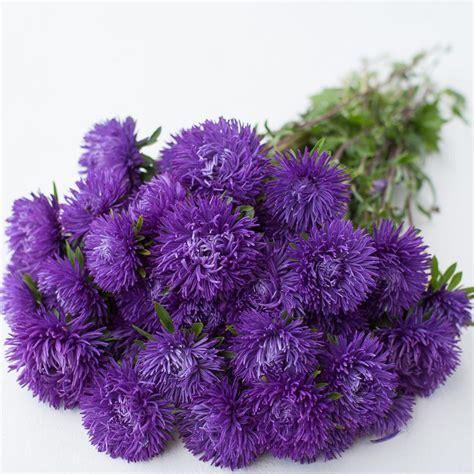 Bibit Bunga Aster Single Mixed China Flower Mix Colour china aster royal purple mix floret shop