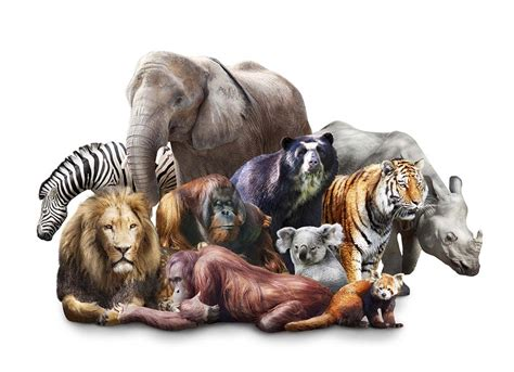 Where All The Animals by Zoo Animals All Together Pictures To Pin On