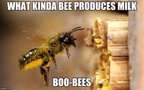 Bee Meme - bee imgflip