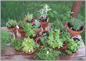 growing an herb garden in containers tipsnips grow herbs in containers