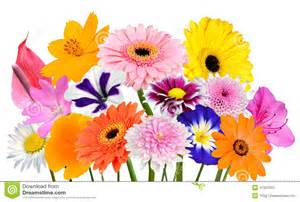 Pink Dahlia Flower - flower bouquet collection of various colorful flowers