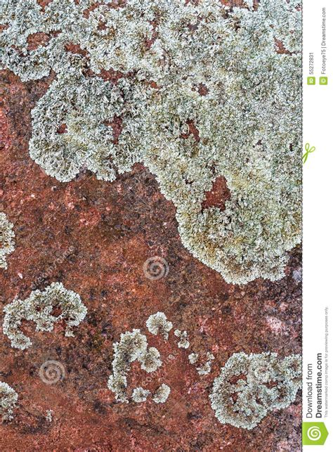 pattern formation algae red rock stone background texture pattern stock photo