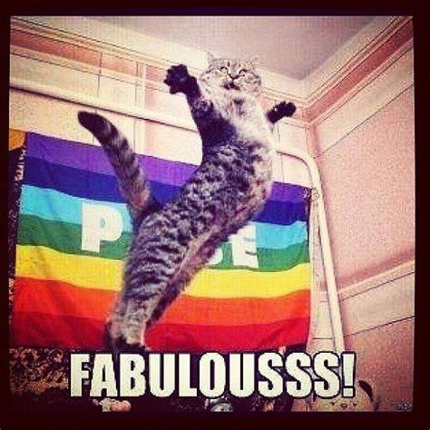 Gay Cat Meme - someone s totally fabulous funny pinterest