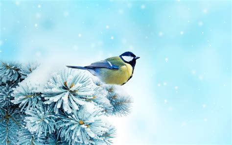 Mural Wall Paper photo collection winter chickadee bird wallpaper