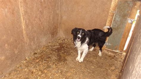puppy mills in colorado 73 dogs living in horrific conditions rescued from puppy mill