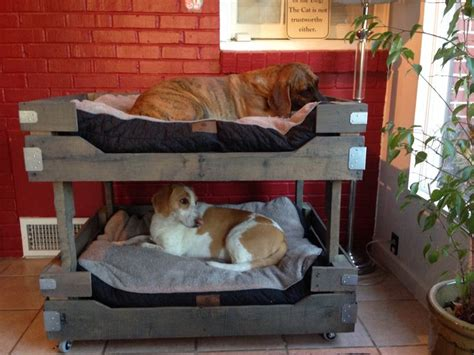 dog bunk beds best 25 pallet bunk beds ideas on pinterest small bunk beds pallet fort and raised