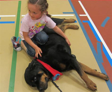 rottweiler therapy rottweiler therapy meet cache rottweiler club of canadarottweiler club of canada