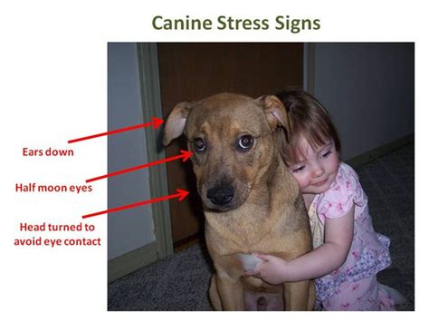 dogs don t like hugs quot dogs don t like hugs quot according to a new study