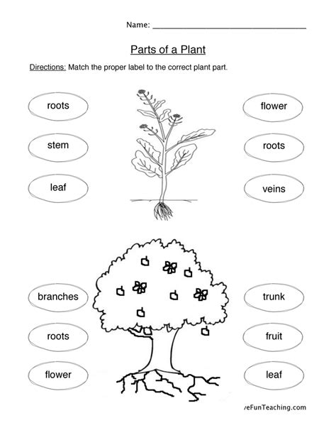 Plant Parts Worksheet by Plant Worksheets Page 2 Of 3 Teaching