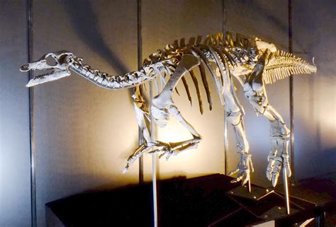 camptosaurus wikipedia