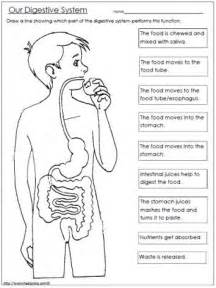 25 best ideas about human digestive system on pinterest
