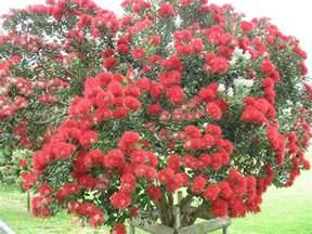 new zealand s christmas tree