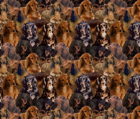 haired wiener haired wiener dogs fabric ickessler spoonflower