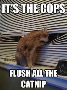 Funniest Cat Meme - lol cats 12