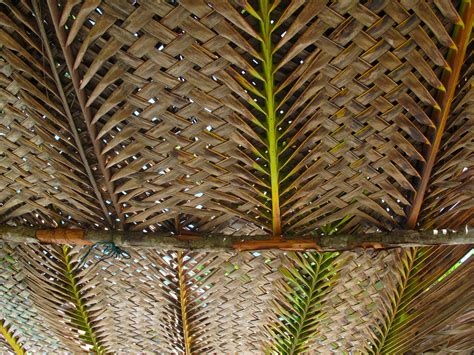 palm roof palm thatch thatched roof panels sc 1 st