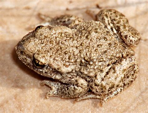 Frog Shedding Or Fungus by Shedding Light On The Mucosome Hibians Org