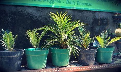 galeri tanaman hias putra garden denpasar januari