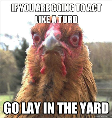 Cock Meme - 27 very funny chicken pictures