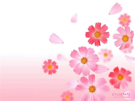 flower wallpaper and backgrounds cool flowers wallpaper nice wallpapers