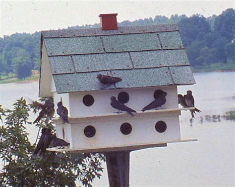 plans purple martin birdhouse house plans