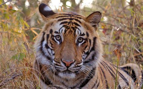bandhavgarh el parque nacional del libro de la selva