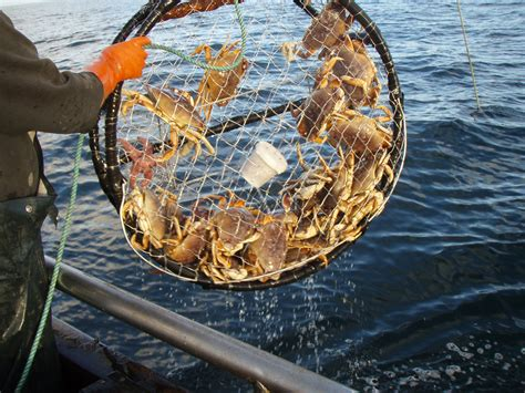 everything you need to about dungeness crab in san