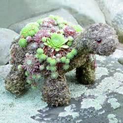 Garden Turtle Succulent Turtles Will Look In Your Garden The Whoot